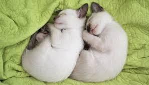 願いが叶いますように♪ ではでは~おやすみなさいにゃん^^