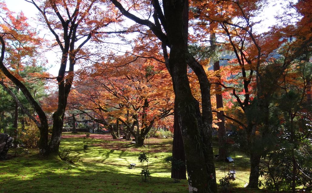2413 - エムスリー(株) 一休みと思ってお出かけしているうちに 年初来高値を更新、 今日も素晴らしい秋の日だった ♫