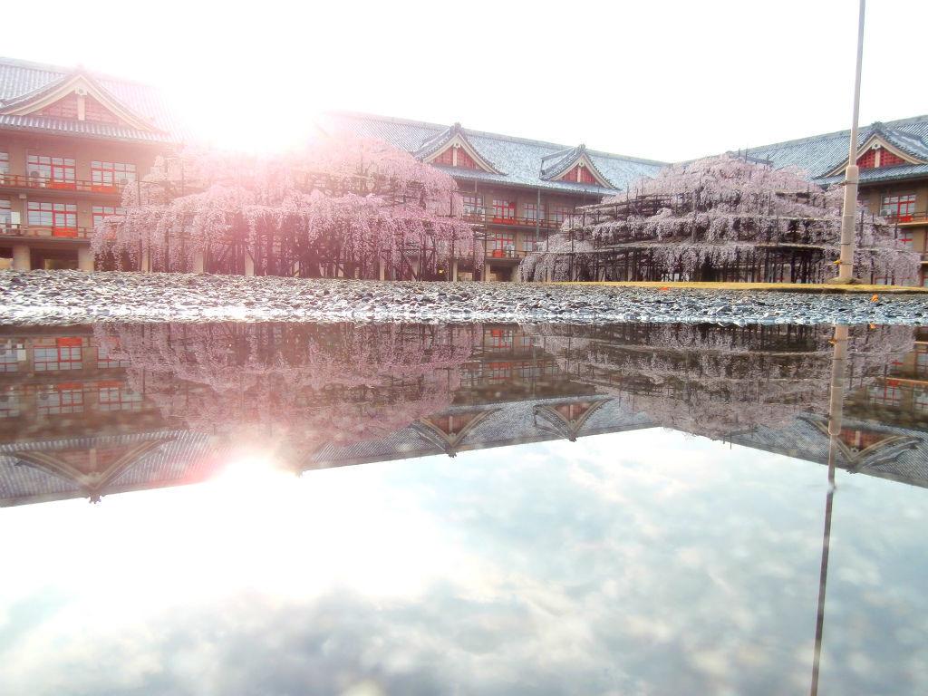 龍神の棲家...。oо○**○оo。... 天理教の桜 建物が異様にデカイので錯覚するが、目測で右は幅20メートル。