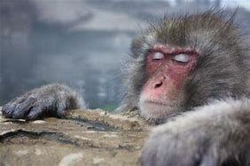 6857 - (株)アドバンテスト ホホホ!(^O^)・・・・  今日温泉で温まって一日を過ごした。 アドバンテストいっ爆上げするかな。