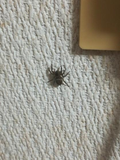 7612 - (株)Nuts 先程見せられた神の使い状態に成っている状態の金蜘蛛に遭遇した 金蜘蛛画像はこちら  いつもの金蜘蛛よ