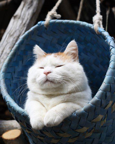 猫声人語 最近冷えるわ