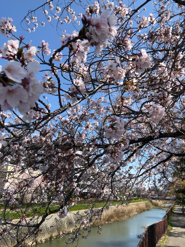 35313026 - ゴールドマン・サックス・世界債券オープンD 何故か他の投稿が消えてしまってるからじゃろうのう。  桜が咲いてたからプレゼントするぞよ。