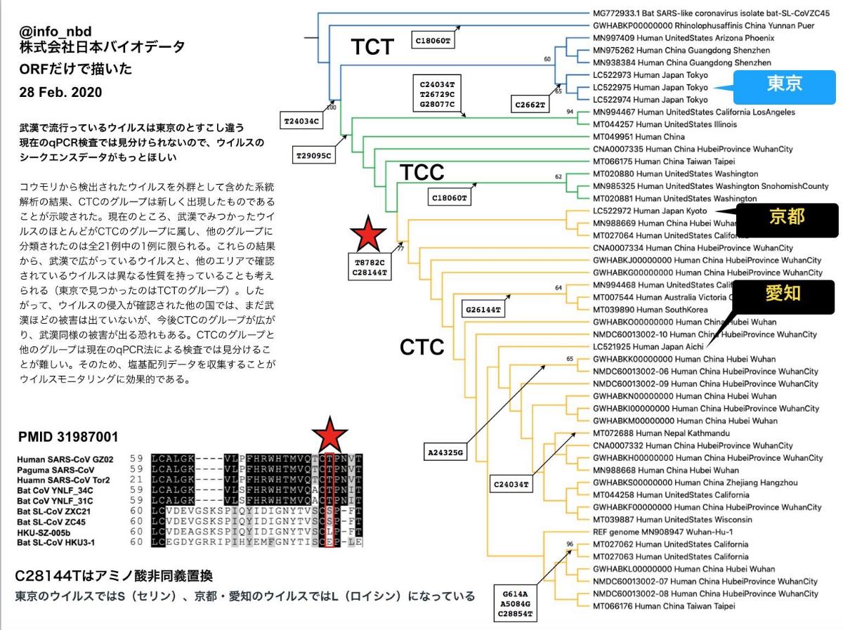 998407 - 日経平均株価 日本バイオデータ。日本に流入した新型コロナのゲノム解析。その系統分析終了。  日本への新型コロナの流