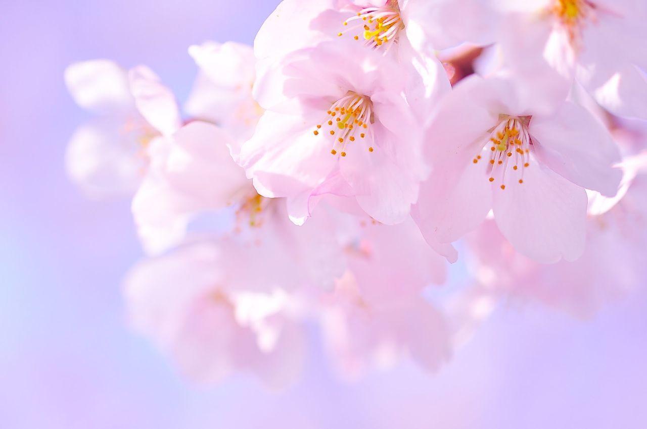 4755 - 楽天グループ(株) 楽天は、4月1日から「楽天グループ」に商号変更する。  2021/03/24 米系大手証券、レーティ