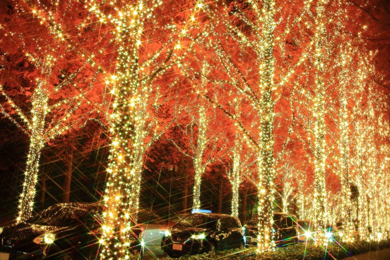 KNDI - カンディ・テクノロジー・グループ お兄のいる関東は初雪見ましたかあ? このあたりの関西はまだ降っていな~い! クリスマスかのう?(&#