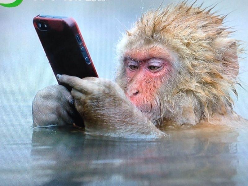 面白い動物温泉猿