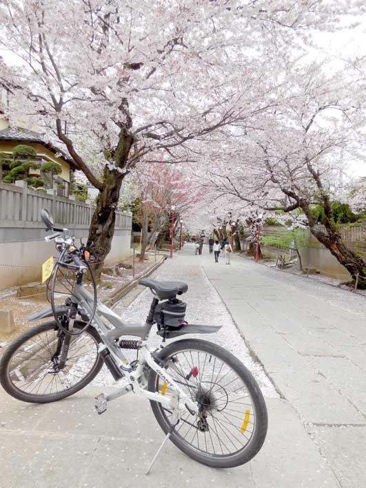 江戸川サイクリングロード 今日は一日曇っていましたねぇ・。 20時頃から月食だって云うのに、見る事は出来そうもありません・。