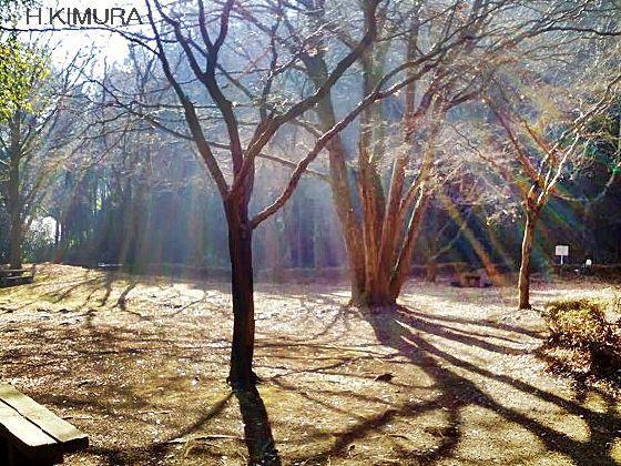 50歳以上の集会所で語らいを ベンチに座り 冬の陽を浴びる 木の影が伸びて 私の足元に届く 気温は低いのですが 暖かく感じた 小鳥