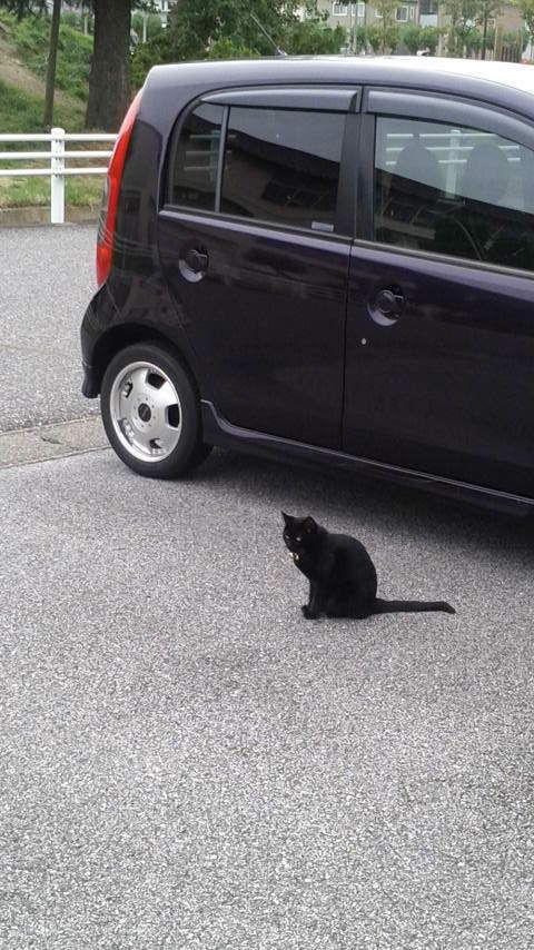 俺には構わんといてくれんさい! 車上荒らしされないように  見張りもするニャン