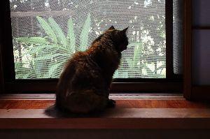写真展示談話トピ kanさん、こんばんは。 台風は何事もなく太平洋上を過ぎ去って行きましたね。  猫にはテレビを見るの
