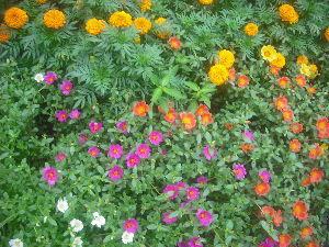 人生を楽しみましょう!! 皆さん、お早うさん 今朝は、曇りです台風は午後か夕方科です、嵐の前の静けさか?無風状態です まあ、園