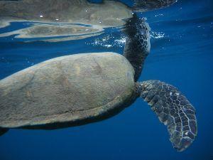 5287 - (株)イトーヨーギョー 溺れかけのジジイが瀕死の息継ぎ(プラ転!) よく頑張った。