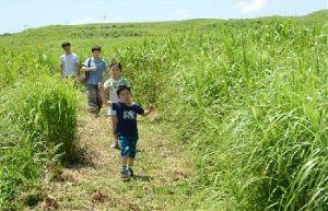 熊本城 歴史の1ページ。今だから見に来て欲しい!! 阿蘇でのこんな楽しみ方も今の季節ならではの事です。 この原野にはたくさんの山野草を探すことが出来ます