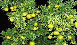 節約 生きがい けち 人生 四季の花さん こんばんは  熱からず寒からず、今が一番過ごし易い季節、食べ物が色々、腹出の秋でも有り