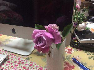 バラに魅せられて。。。 十勝岳さん 皆様 こんにちは バラ好きの竹庵です。  私は鎌で左手の指を切ったりして、ホント、御難続
