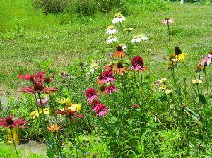 バラに魅せられて。。。 初めまして東京都在住のコロンパパと申します。4年前から石ころだらけの庭を一人こつこつと整備しリッピア