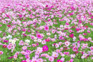 ☆リアルトレード日記☆デイトレで億を目指す♪ みんな、お掃除ありがとう!\(^o^)/  いっぱいお花咲かせちゃう♬ 🌺🌻💐🌷🌺🌼🌸🌹🏵🌺🌻💐🌷🌼