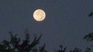 芭蕉から文月まで   「十三夜」      ほろ酔いで辿る家路や十三夜    風船