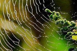芭蕉から文月まで    「蜘蛛の巣」       蜘蛛の巣の糸が煌く夕茜    風船