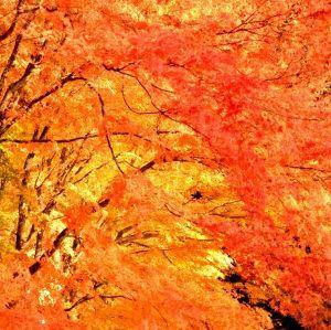 気楽に楽しく川柳しませんか^^ 雰囲気ね  黄葉すすむ  秋日和
