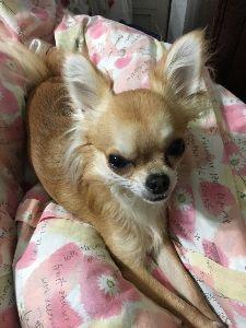シェンクリンはじめました はっ! おはようございます!  というか、自分は一体なぜリビングに寝っ転がっていたのか? 今、目覚め