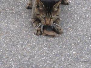 ☆デジカメ写真で遊びましょう☆ 猫が蛇を食べていた。