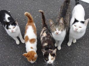 ☆デジカメ写真で遊びましょう☆ 山道を車で走っていると道路に猫が? 車を止めたら、逆に近寄ってきた。 「ウァ-」迷惑だ。 食料調達の