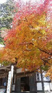 昭和29年,30年の同級生お話しようよ こんにちは。(^^) 紅葉狩りの写真です。 山の上は、とても寒くて吐く息も白く ダウンに毛糸の帽子を