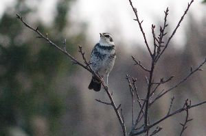 50歳♀です こんにちは。 今日は午後から雨です。  木々の間から見える青空。 綺麗な青ですね。  冬場は凍結が怖