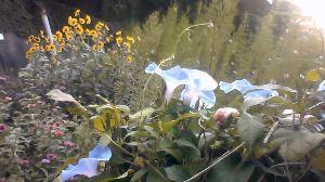 広島に住んでいます ┳┻|   ┳|_∧   ┻|ω・)    庭の花 いい感じかな ┳┻|&sub