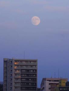 にゃんこインベストメントホールディングス(株) 明日スーパームーン! 曇って見られないかもしれないので、 今日のスーパームーンの月の出を撮ってみまし