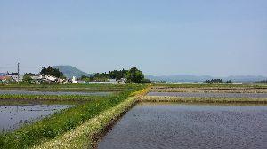 カリンたんの部屋 薬来山と、田植え真っ盛りの田んぼ。