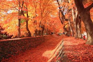 分かち合い♪ こんにちは。 富士山のご近所なので、時折散策に出かけます。 いろんな富士山に出会えます。  先日は河