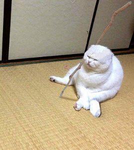 ♪株喫茶♪ 【大神神社】 いい写真でつねぇ~ ネコは居住地の氏神と よく仕事で訪れるエリアの3神社 計4神社に参