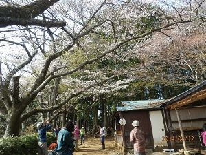 高尾山、陣馬山を好きな人 昨日は与瀬神社から明王峠をピストンでした。与瀬神社は例大祭でたいへん賑わっていました。明王峠の桜は満