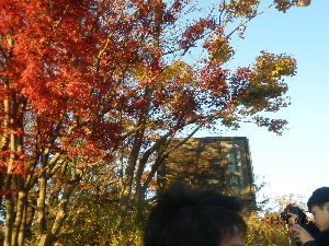 高尾山、陣馬山を好きな人 明王峠から高尾山へ行ってきました。紅葉を期待して行きましたが、少し遅かったようです。それでも一丁平や