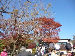 高尾山、陣馬山を好きな人 先日、神奈川の宮ケ瀬湖畔を歩いてきました。愛川の半原バス停から公園~北岸道路~宮ケ瀬園地など経て湖畔