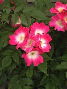 喜怒哀楽をぶつけませんか・・・ こちらは少し色づき始めたところです。  紫陽花がきれいだと梅雨だなあと感じますね。  今日は20度な