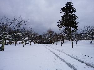 MOON NIGHT PARTY 2 流れ星さん こんばんは~🌠  昨夜から雪が降り、5cmほど積もりましたよ❕ 東京だったら大パニックだ