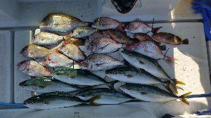 瀬戸内で釣り三昧 7/15 中潮 5名釣行  暑い^^; とにかく暑い^^;  気温もさる事ながら、海面からの照り返し