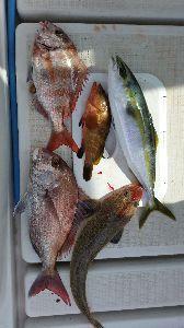 瀬戸内で釣り三昧 5/27 中潮  天候も潮も良さげやし、 そろそろ水族館コースの爆釣を期待しながら・・・ 潮を見なが