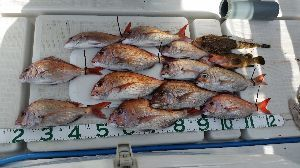 瀬戸内で釣り三昧 9/1 中潮 水温14.7℃ 2名釣行  久し振りの釣行に、海に嫌われてないかと ドキドキしながら出
