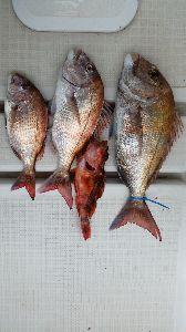 瀬戸内で釣り三昧 3/18 大潮   天候 晴  最高予想気温 18℃  ウソつけ><w  ずーっと曇りで 風なんか、
