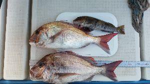 瀬戸内で釣り三昧 3/24 小潮 水温10.5℃  日曜日は諸用で海に出れず、 ウズウズしてるのに我慢出来なくなって、