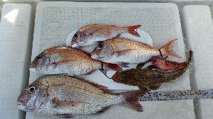 瀬戸内で釣り三昧 9/2 小潮 3名  今年はダメだなぁ~ 昨年の今頃は一人で10匹捕った日もあったし、 魚探にも、ハ