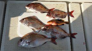 瀬戸内で釣り三昧 4/29 大潮  朝の早くから、4人で出航♪ 今回の釣行は友達の嫁さんがタイラバデビューw  新しい