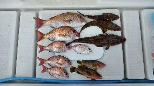 瀬戸内で釣り三昧 10/7 中潮 4名  またまた1ケ月ぶりの釣行 運動会や悪天候、台風と中々釣行に恵まれなくて、 や