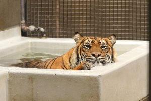 虎からの 一期一会……の集い しゃ〜ない ほな 風呂入ろか