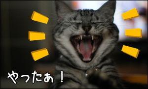 虎からの 一期一会……の集い よっしゃ〜